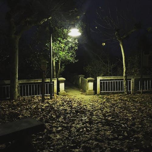 Základová fotografie zdarma na téma městský park