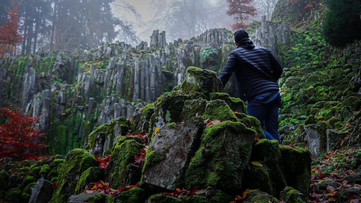 drzewa, góra, kamienie