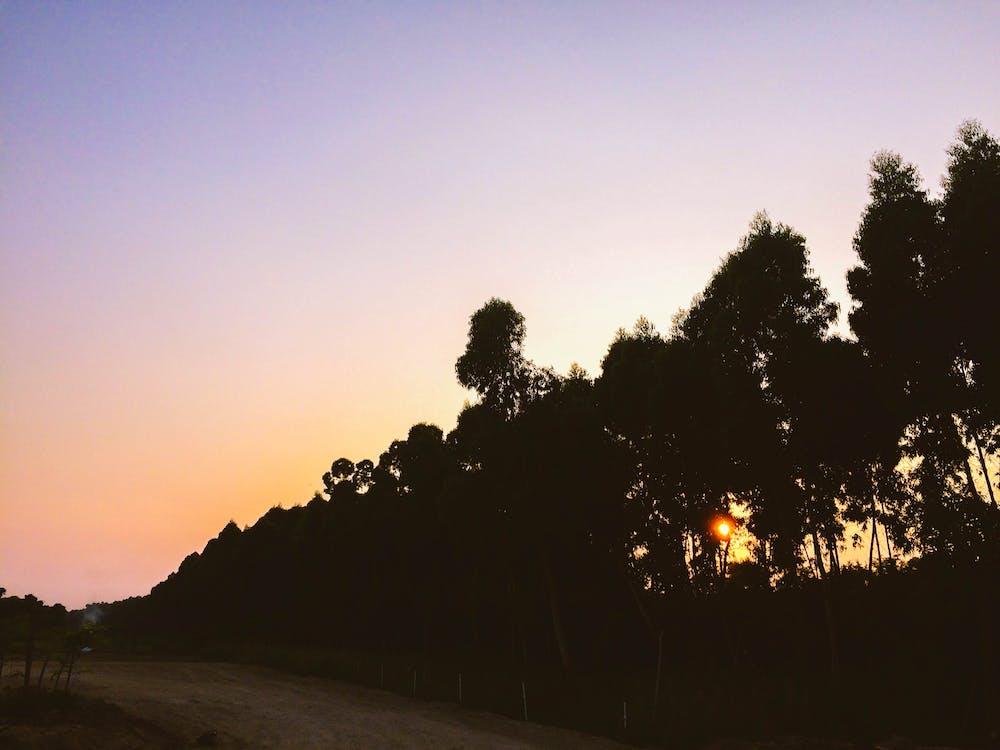 ağaçlar, arkadan aydınlatılmış, doğa