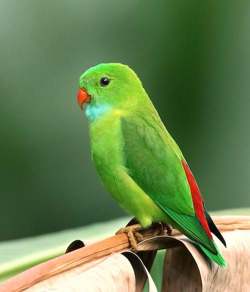 hayvan, hayvanat bahçesi, makro, muhabbet kuşu içeren Ücretsiz stok fotoğraf