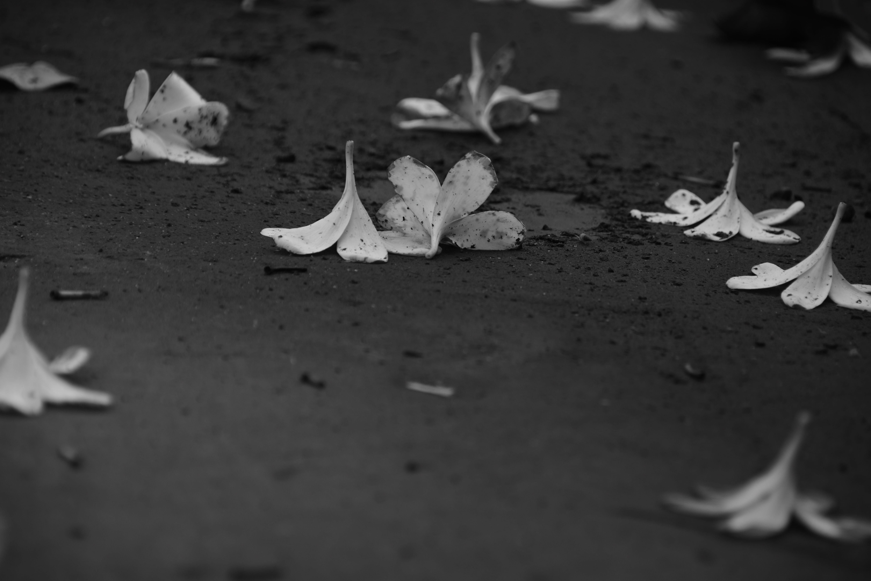 Základová fotografie zdarma na téma květiny, sušené květiny