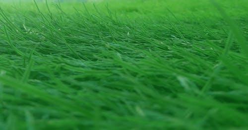 Free stock photo of cagaaran, doog, green grass