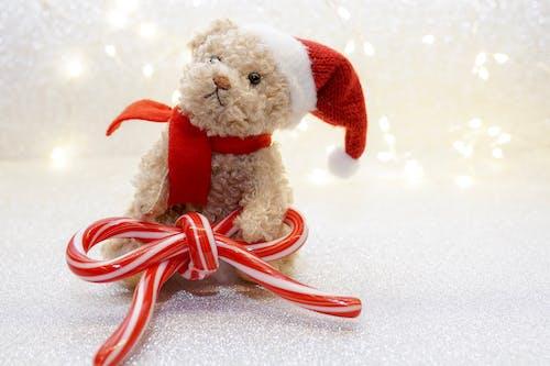 Imagine de stoc gratuită din adorabil, câine, culori, decorațiune de crăciun