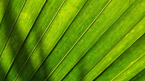 Green Fan Leaf