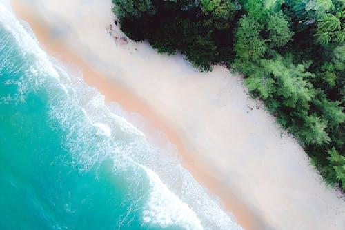 Foto profissional grátis de aerofotografia, árvores, beira-mar, costa