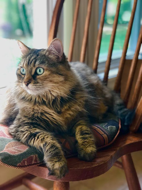 Close-Up Photo of Cat Laying On Chair