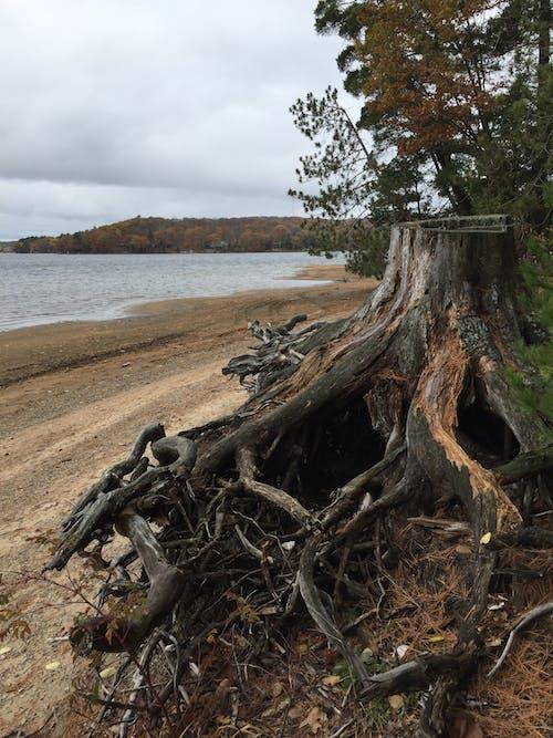 Бесплатное стоковое фото с корни, пень, пляж