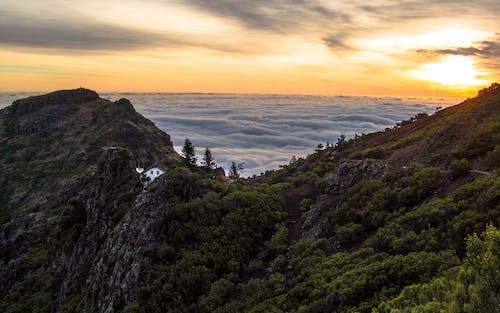 Foto d'estoc gratuïta de alba, arbres, capvespre, fullatge