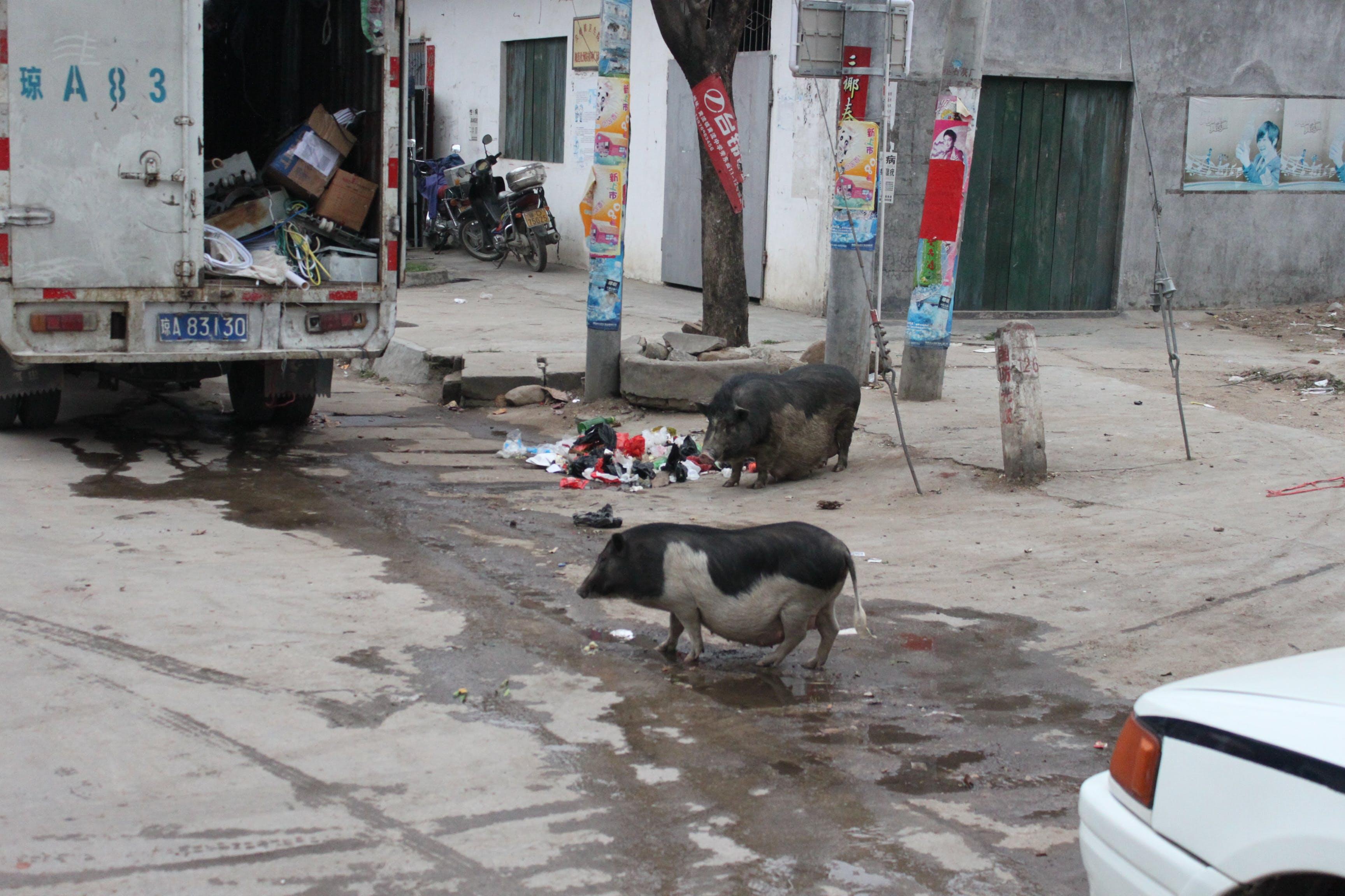 Çin, dianasilaraja, şehir hayatı içeren Ücretsiz stok fotoğraf