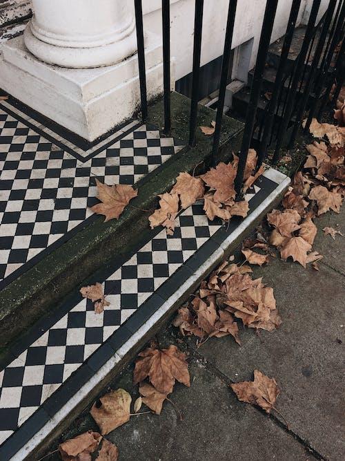 Δωρεάν στοκ φωτογραφιών με αλέθω, δρόμος, ντιζάιν, ξεραμένα φύλλα