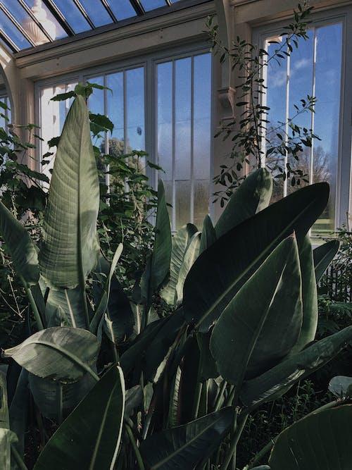 คลังภาพถ่ายฟรี ของ กลางวัน, การเจริญเติบโต, ความสด, สวน