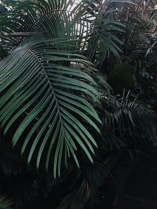 Kostnadsfri bild av ormbunke, ormbunksblad, växa, växt