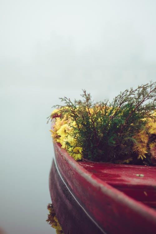 Kostenloses Stock Foto zu blume, blumen, blumen auf dem boot, boot