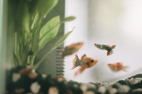 Free stock photo of animal, animal photography, fish, fish tank