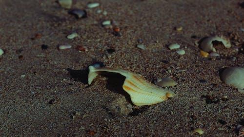 Ingyenes stockfotó a tengernél, homok, homokos strand, kagyló témában