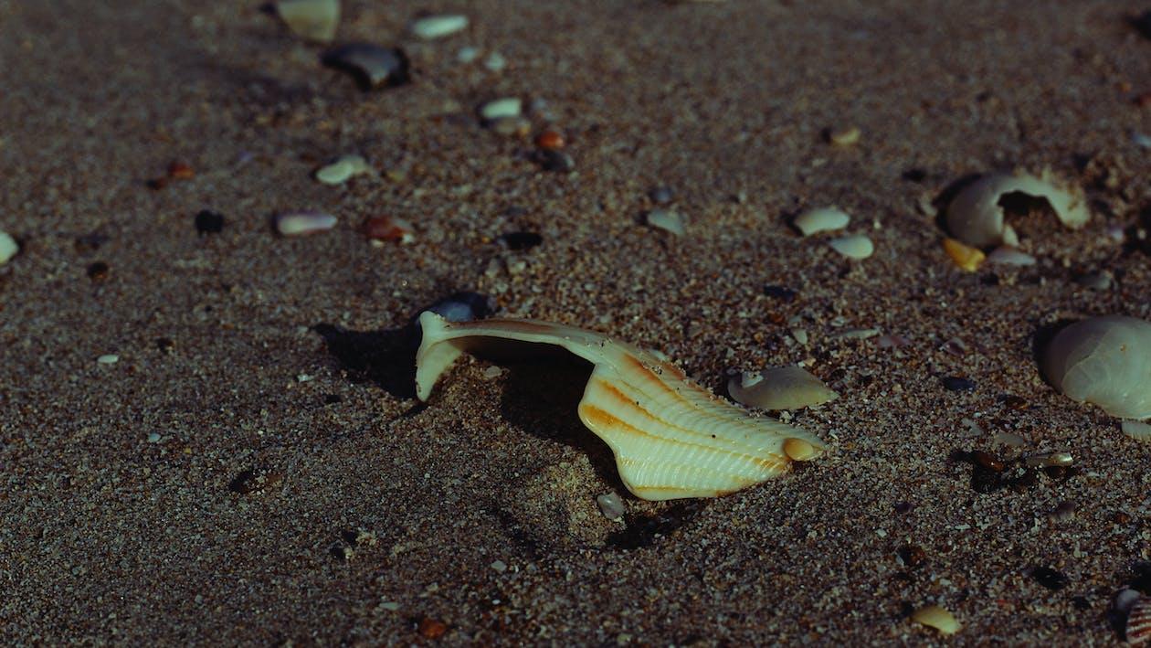natur, naturfotografi, sand