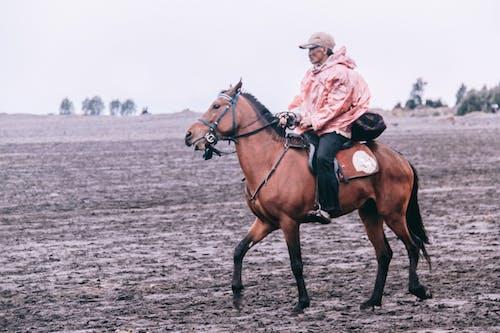 Free stock photo of bromo, east java, horse, horseman
