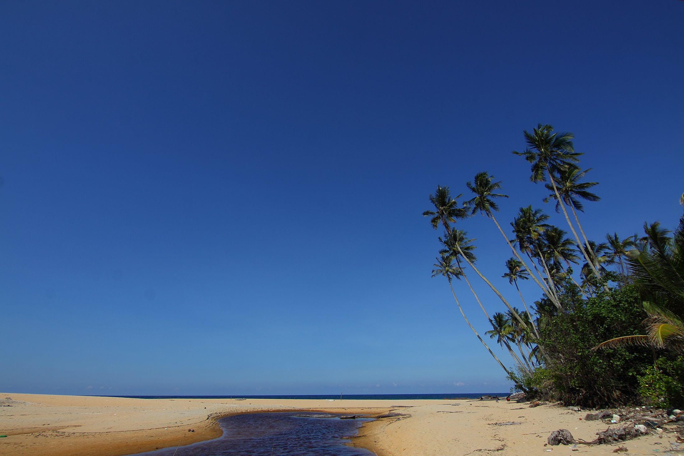 Brown Sandy Beach With Coconut Trees