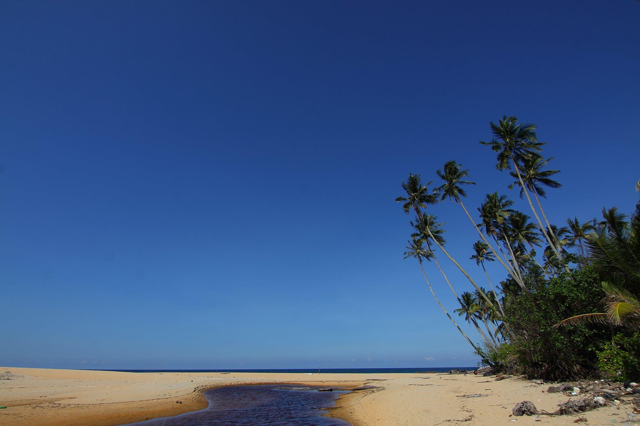 คลังภาพถ่ายฟรี ของ ชายทะเล, ชายหาด, ต้นไม้, ทราย