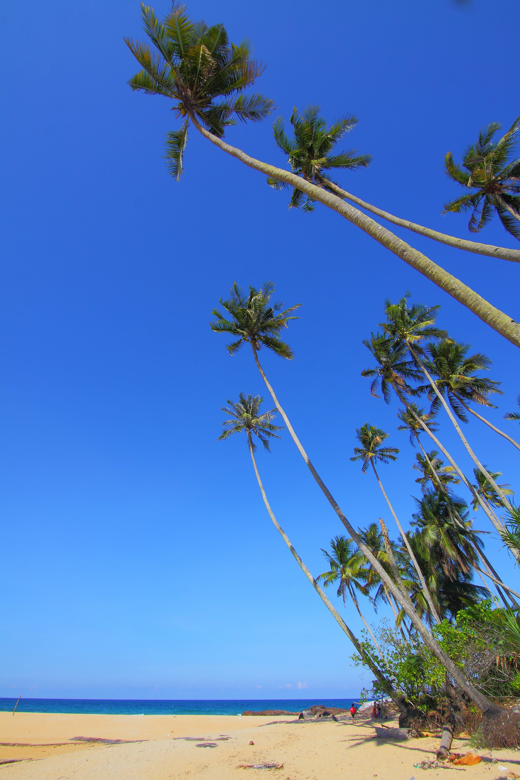 Coconut Trees on Seashore Under Blue Skies