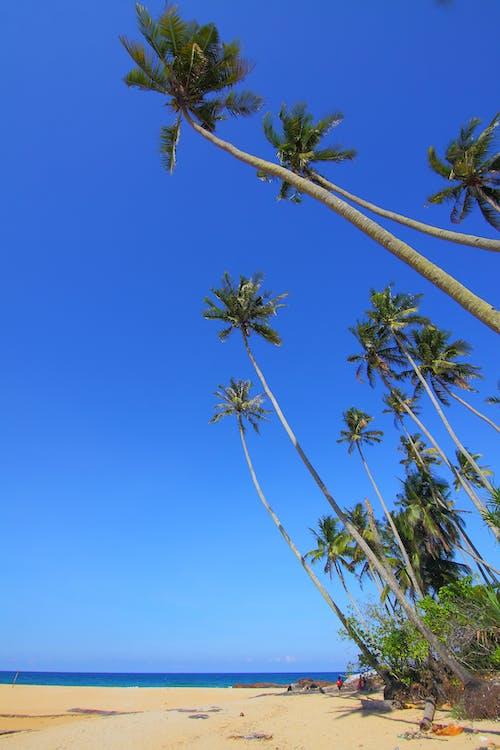 Coconut Trees on Seashore Under Blue Skies