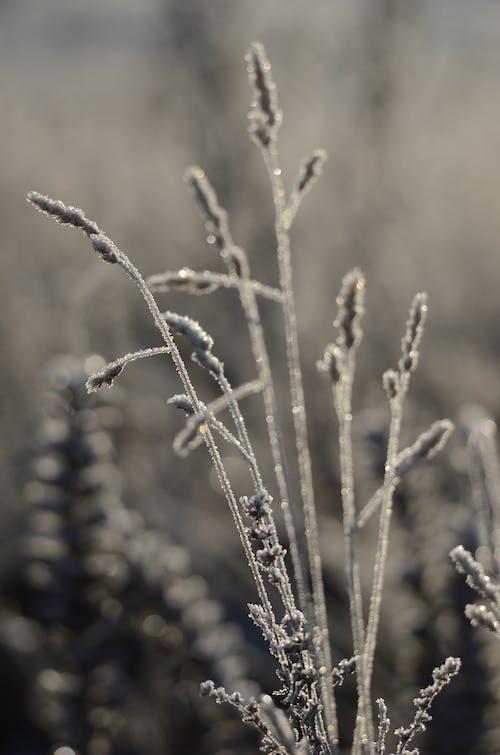 Δωρεάν στοκ φωτογραφιών με winternature, Φινλανδία, φύση, χειμώνας