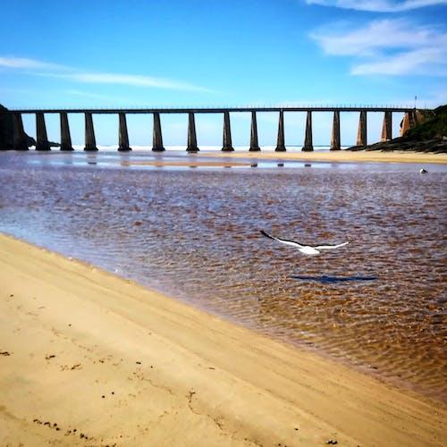 Fotos de stock gratuitas de cerca del mar, Gaviota, puente