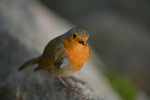 Fotobanka sbezplatnými fotkami na tému detailný záber, divočina, divý, krídla