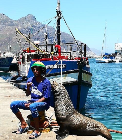 Fotos de stock gratuitas de amistad, barco, costa, foca