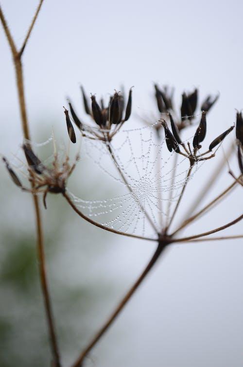 Free stock photo of nature, rain, raindrops