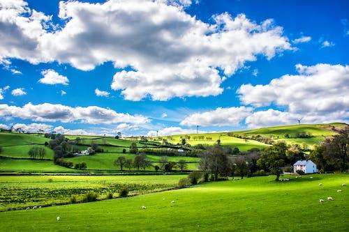 乾草地, 動物, 國家, 夏天 的 免费素材照片
