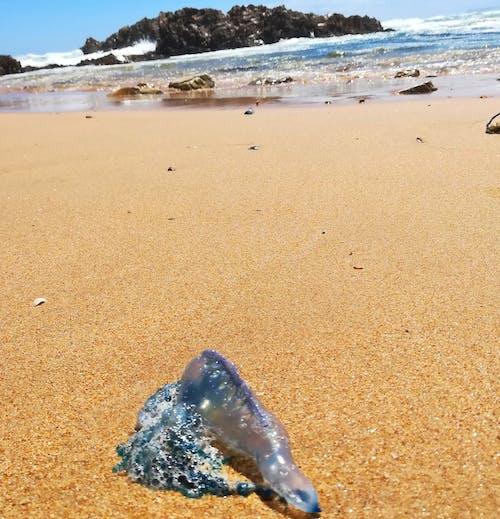 Fotos de stock gratuitas de arena, dice adiós, mar, mosca azul