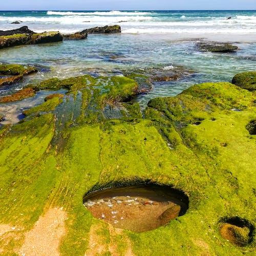 Fotos de stock gratuitas de algas marinas, dice adiós, mar, vacaciones