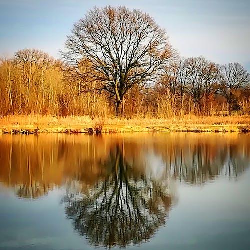 Fotos de stock gratuitas de árbol, espejo, imagen reflejada, reflejo