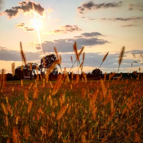 Fotos de stock gratuitas de campo de hierba, césped, cielo, nubes