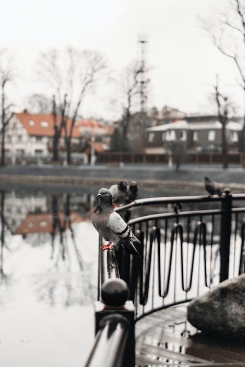 난간, 날개, 동물, 동물 사진의 무료 스톡 사진