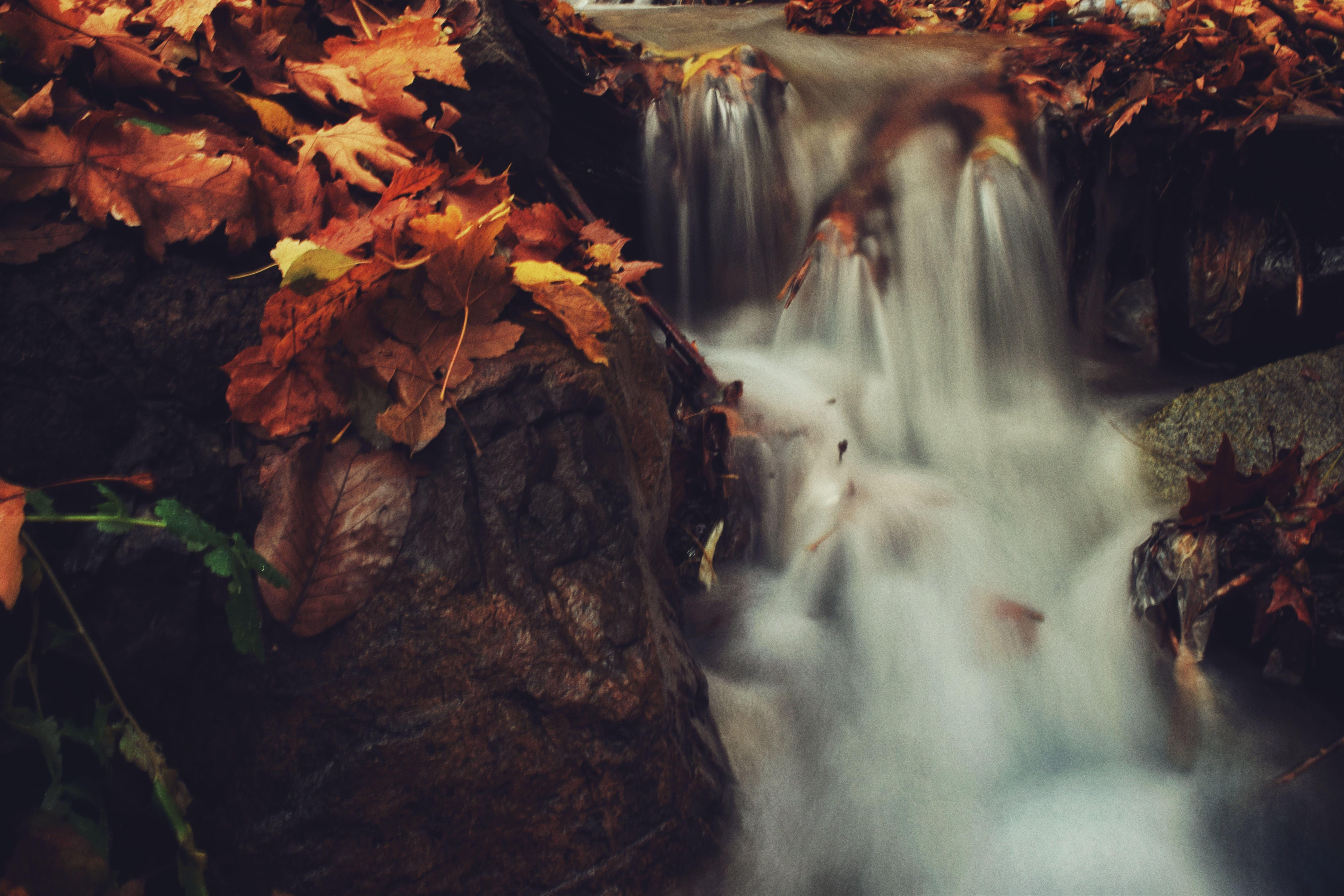 Falls With Brown Leaves