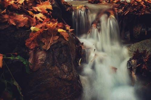 Бесплатное стоковое фото с вода, водопады, движение, дерево