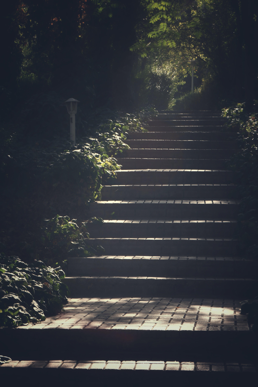 ガイダンス, ステップ, パーク, 光の無料の写真素材