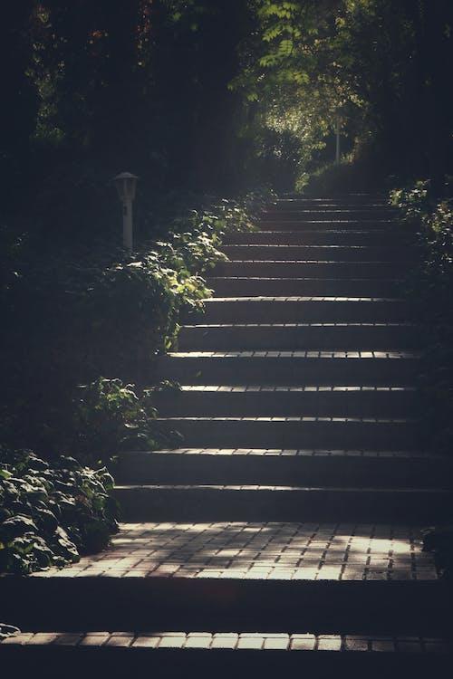 人行道, 光, 光線, 公園 的 免费素材照片
