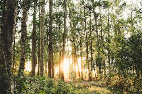 Gratis stockfoto met 4k achtergrond, Bos, bossen, dageraad