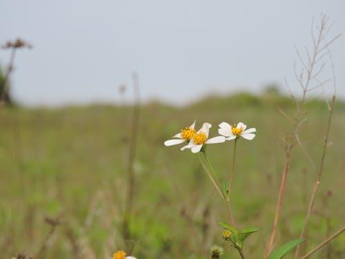 Foto d'estoc gratuïta de hoa xuyến chi