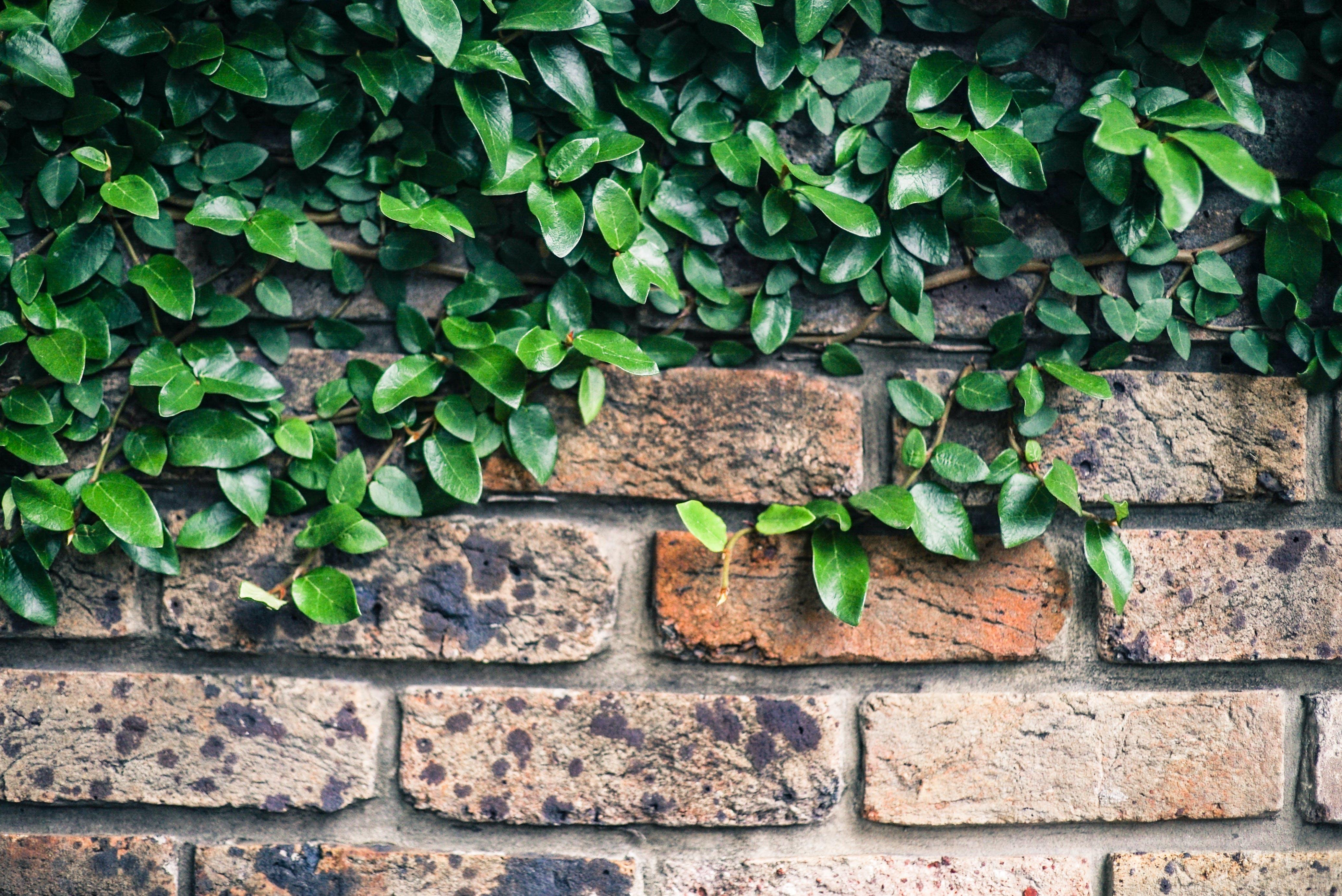 Green Leaf Plant on Wall