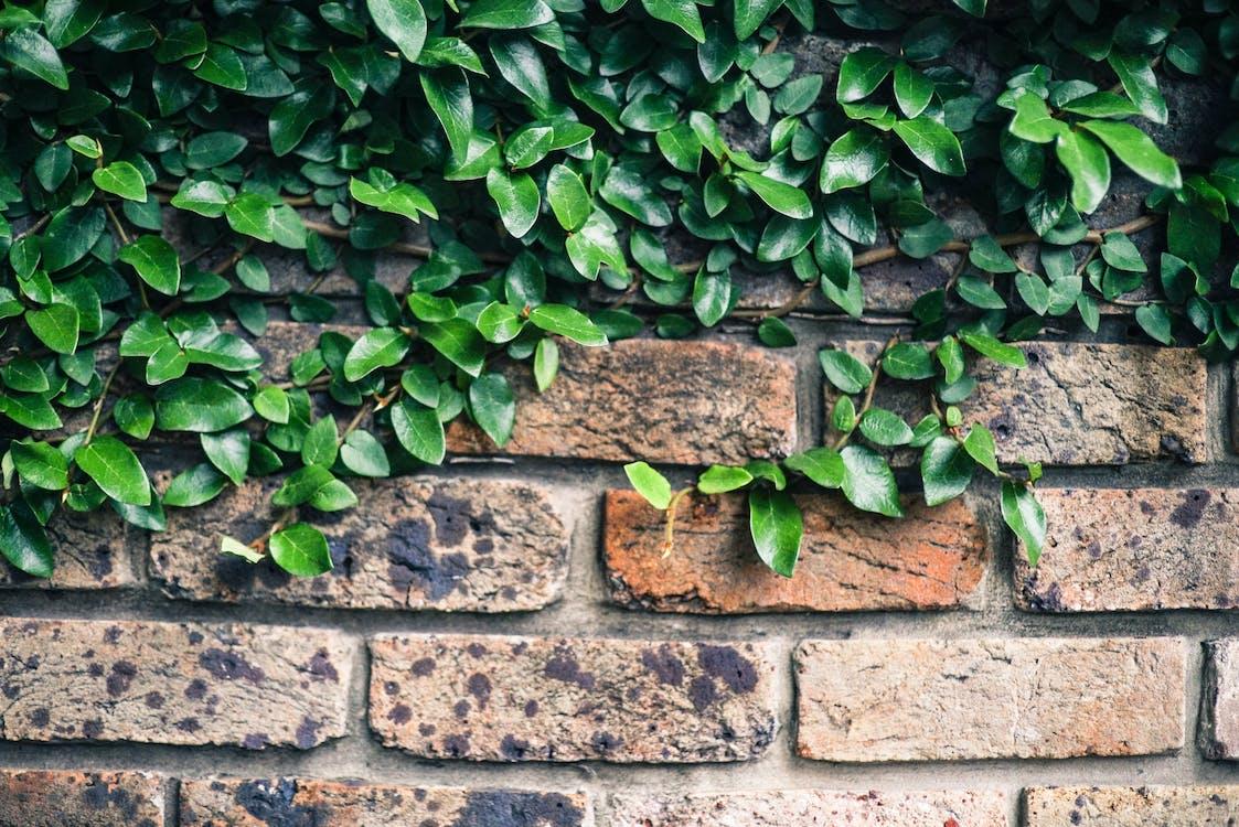 Pianta A Foglia Verde Sulla Parete