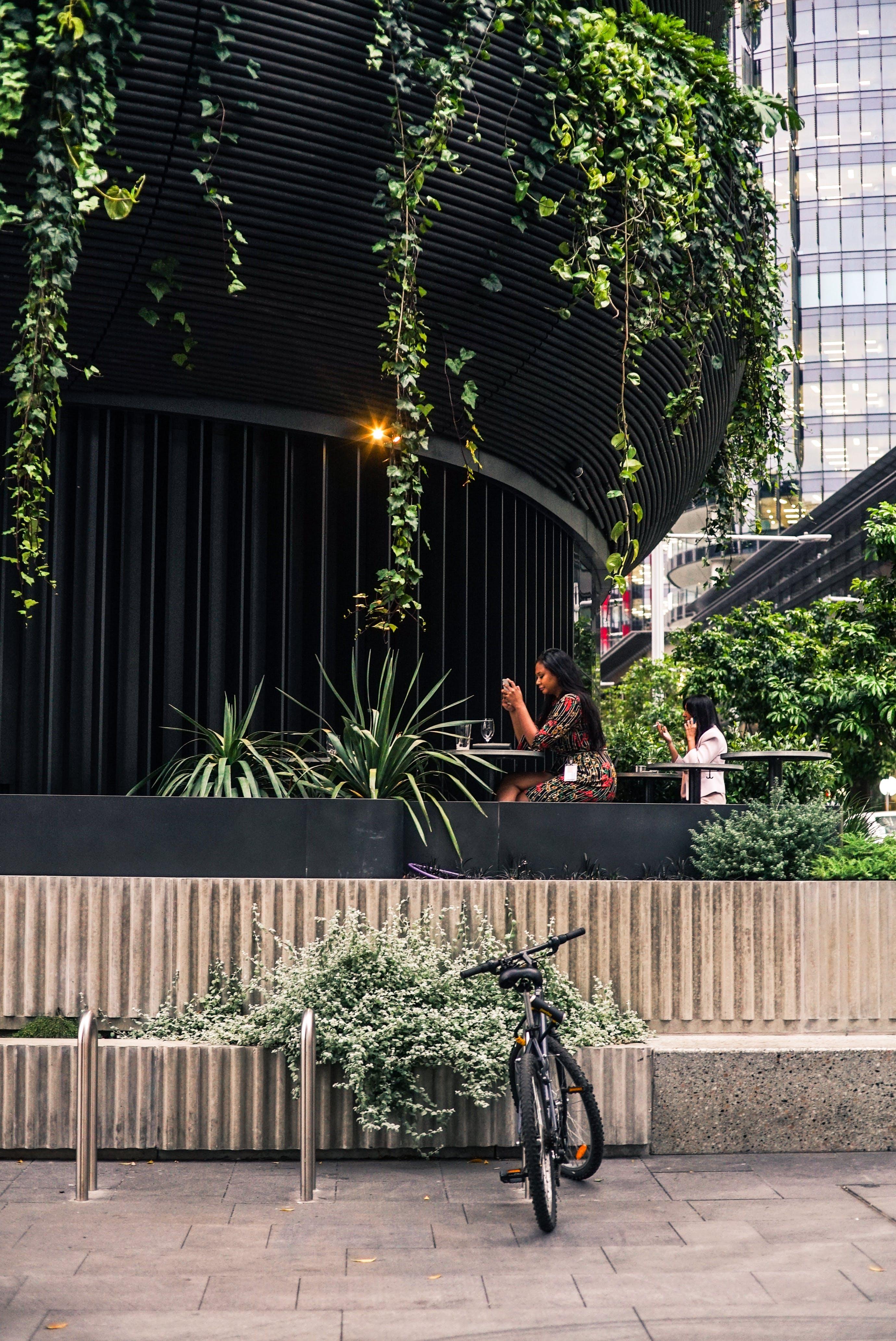 Woman Sitting on Chair Near Green Leafed Plant
