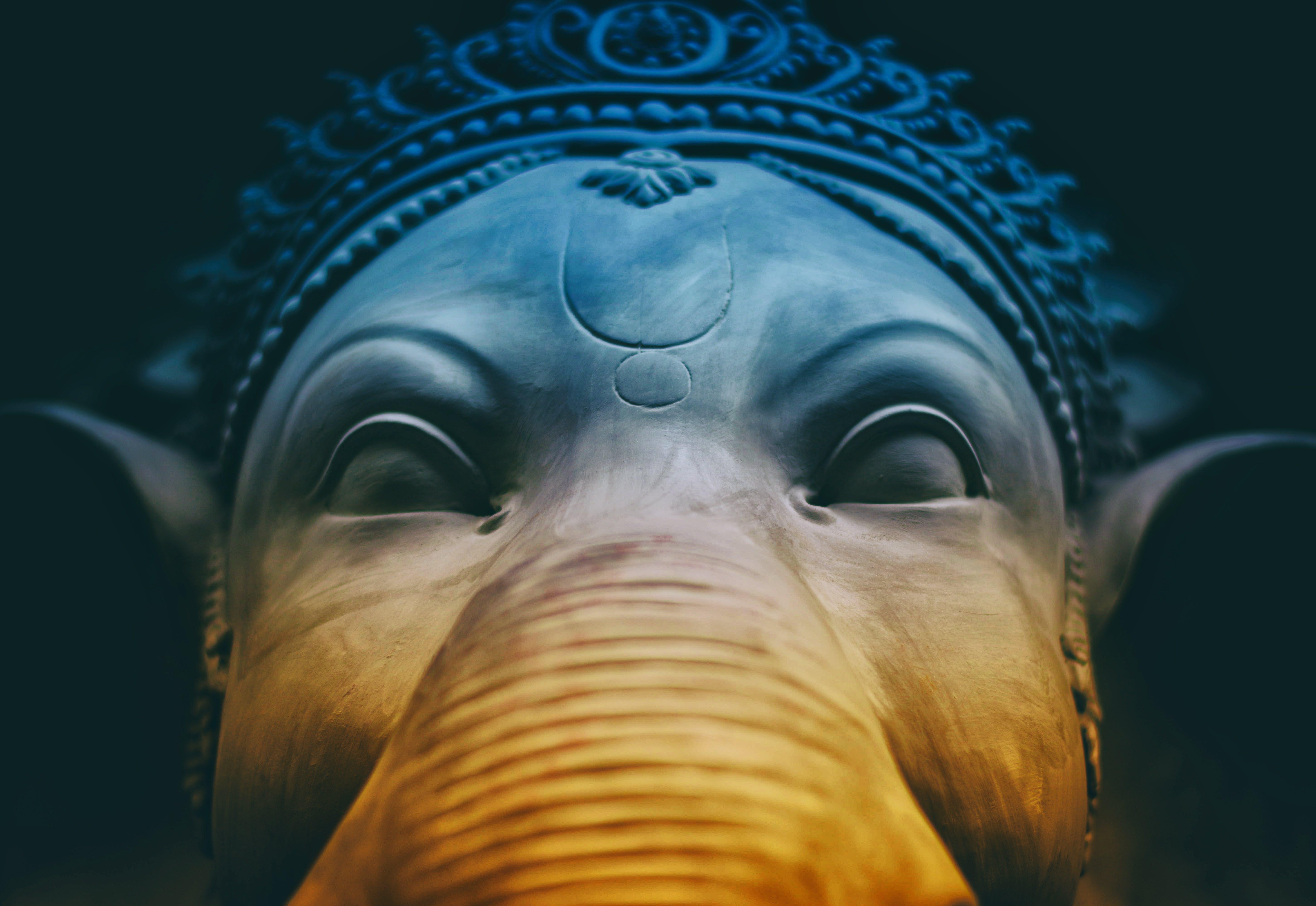 Základová fotografie zdarma na téma na výšku, slon, umění, zblízka