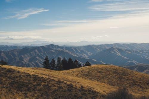 Immagine gratuita di alberi, ambiente, cielo, cresta