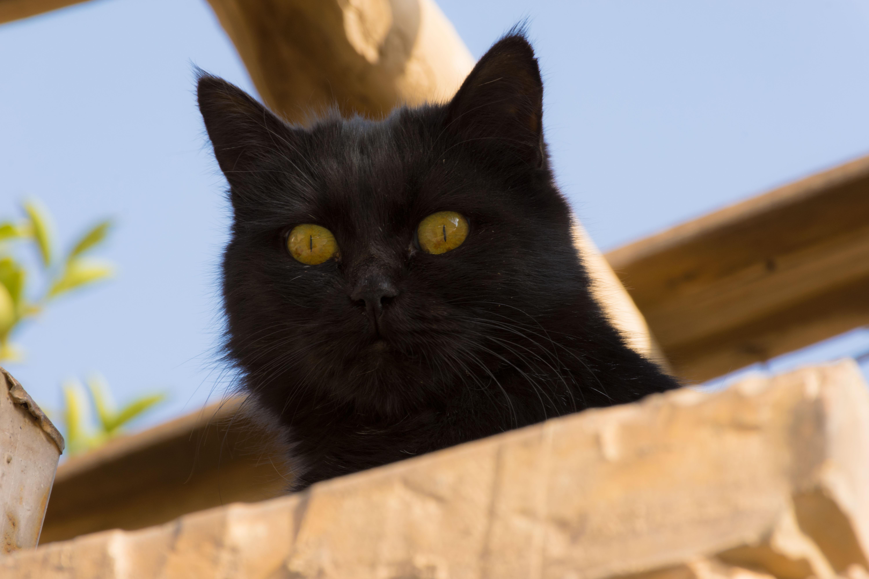 www zdarma černá kočička com