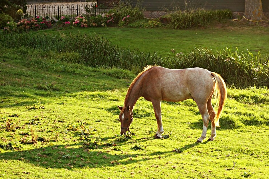 Brown and White Horse Eating Green Grass during Daytime