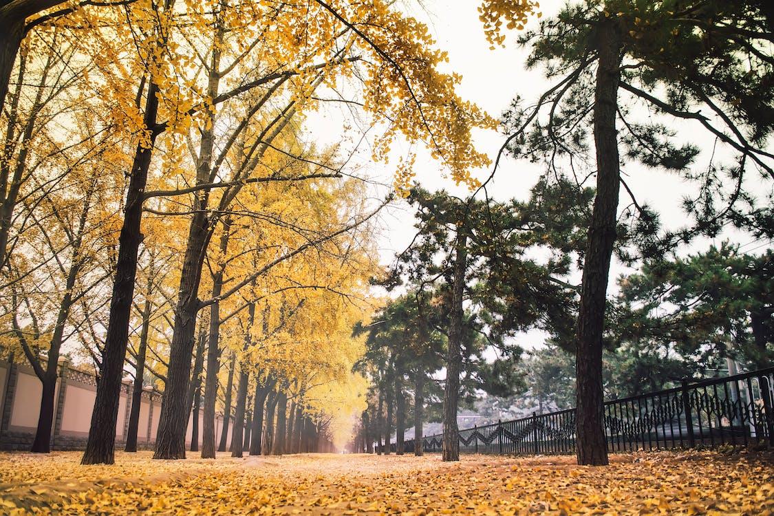 北京, 季节, 树林